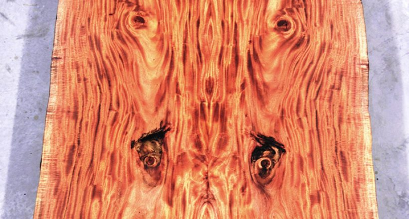 What is Mahogany Hardwood? Creating Clarity from Confusion